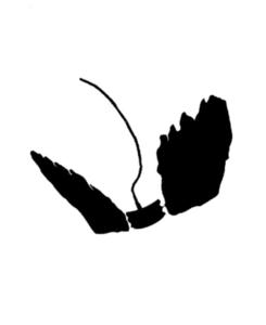 Vleugelset voor Birdie (pair of wings)